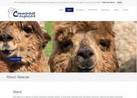 Commonside Alpacas